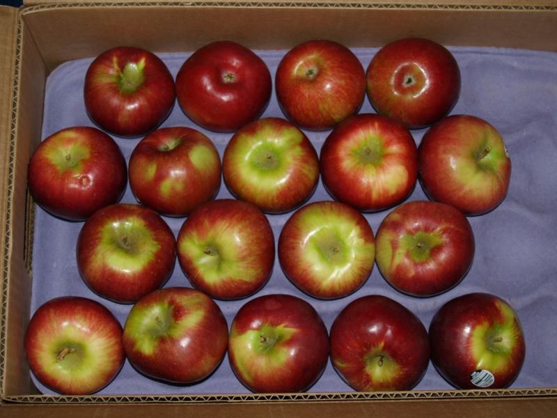 2014-11-01 CLC Apple Pie Workshop_PB019606