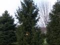 2014-12-19 CLC Christmas Tree_PC199751