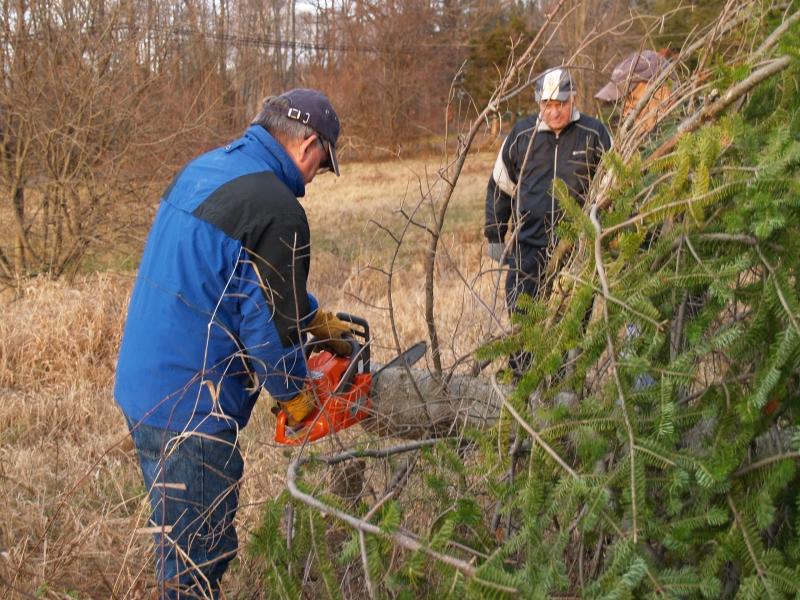 2015-12-18 CLC Xmas tree felling_standingPC181175