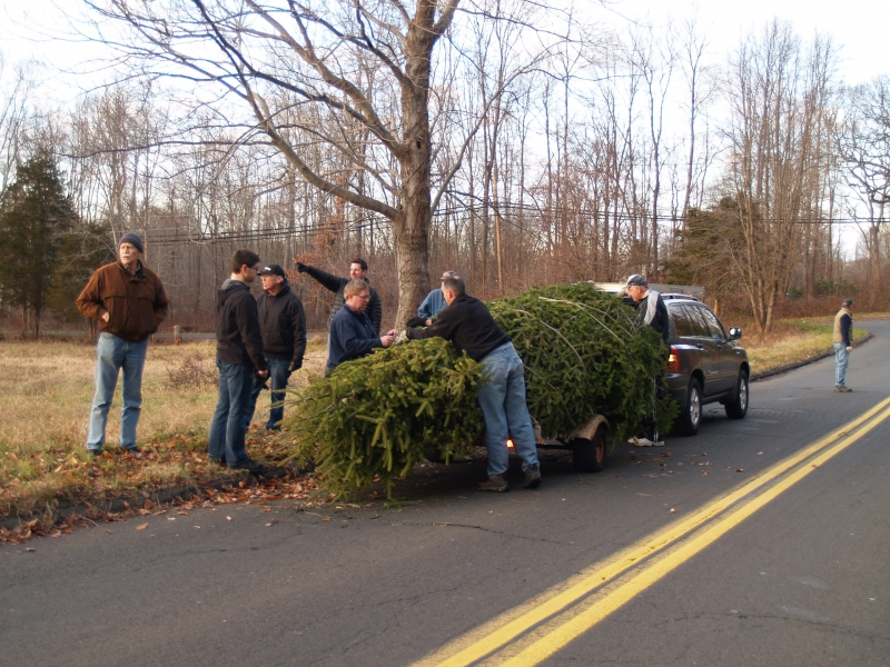 2015-12-18 CLC Xmas tree felling_standingPC181178