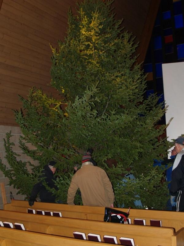 2015-12-18 CLC Xmas tree felling_standingPC181187