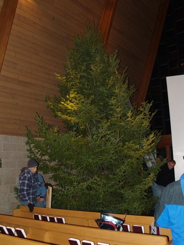 2015-12-18 CLC Xmas tree felling_standingPC181191
