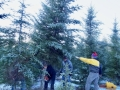 2019-12-20-Tree-Cut-and-Santuary-Placement-DSC05518b