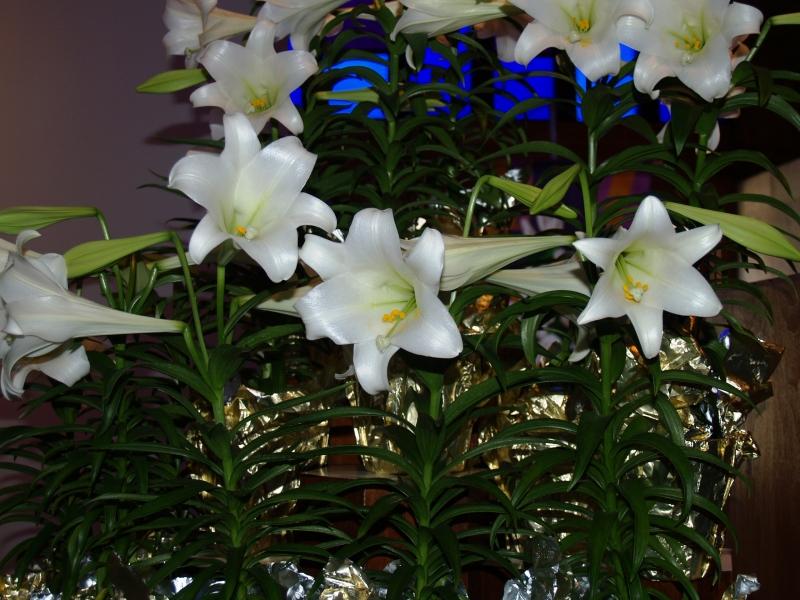 2015-04-05 CLC Easter memories_P4050405b.jpg