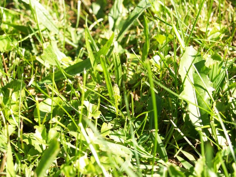 CLC082413 Garden of Mertz _P8247508