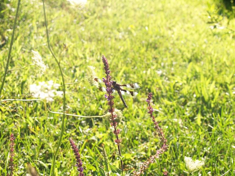 CLC082413 Garden of Mertz _P8247509
