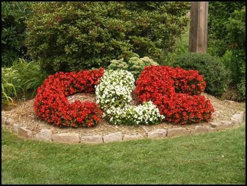 CLC082607CLC flowers